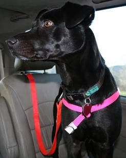 dog seat belts help prevent auto accidents