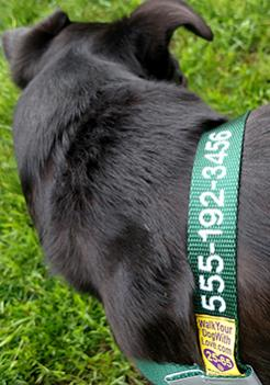 The Sportso Doggo Harness in Forest Green