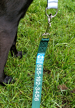 The Sportso Doggo Leash in Forest Green