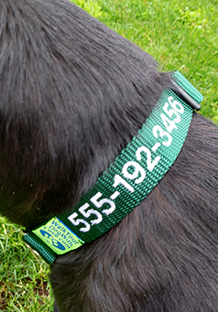 The Sportso Doggo Collar in Emerald Green