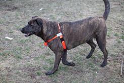 The Sportso Doggo in Hunter Orange