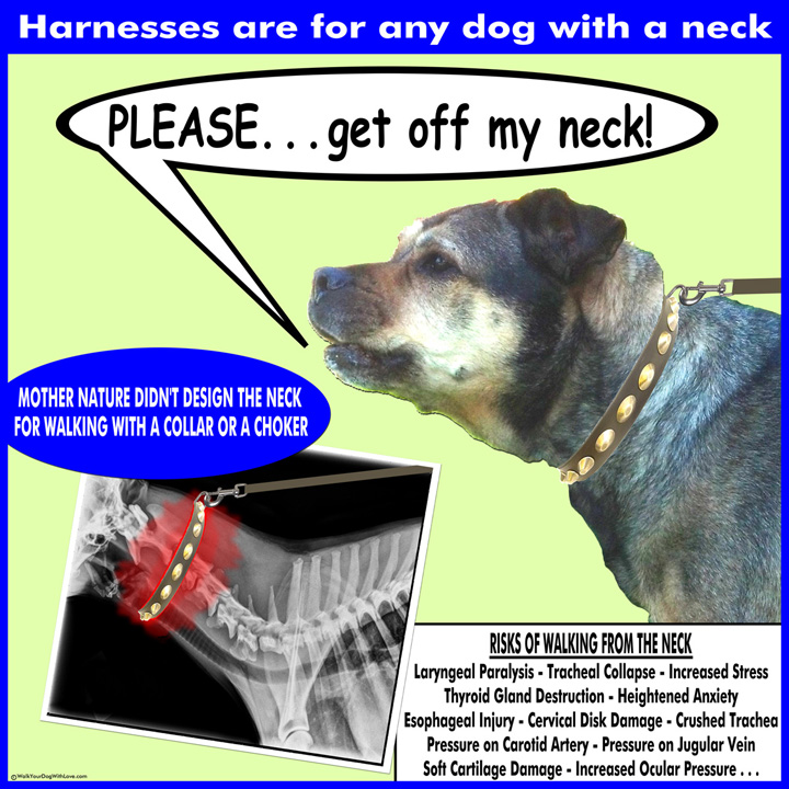 10 Reasons Not to Walk Your Dog By the Neck